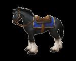 Black Stallion Bridle(WoW Classic)